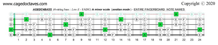 A minor scale (aeolian mode) : AGEDC4BASS fingerboard notes